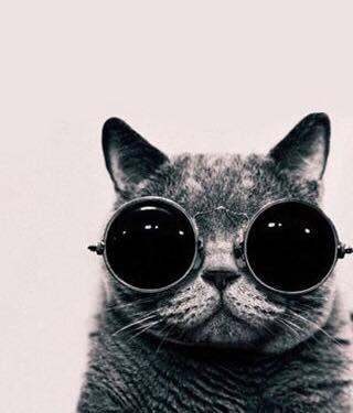 """空前の猫ブーム♡""""Cat""""シリーズ揃いました^^"""